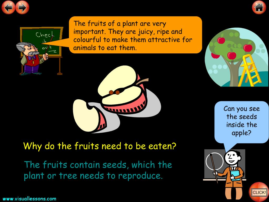 The fruits of a plant are very important. They are juicy, ripe and colourful to make them attractive for animals to eat them.