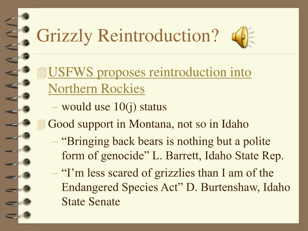 Grizzly Reintroduction?
