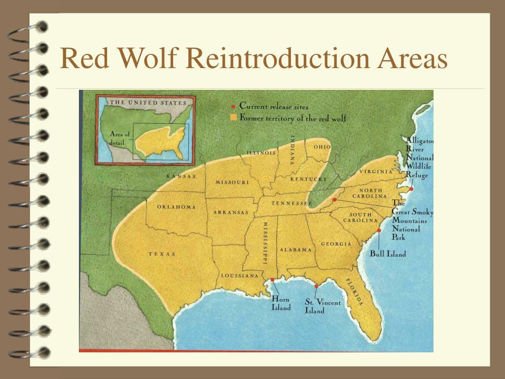 Red Wolf Reintroduction Areas