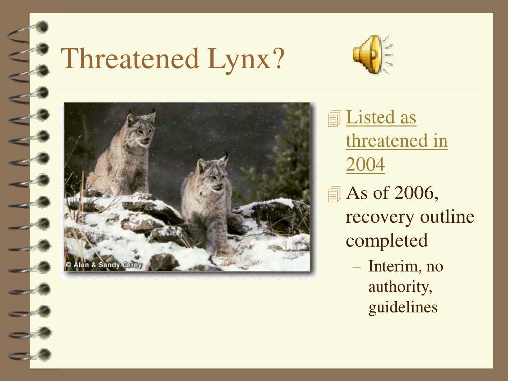 Threatened Lynx?