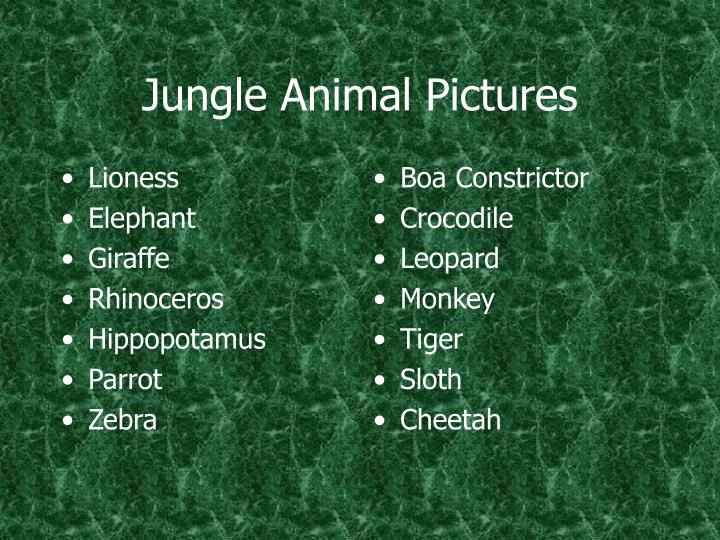 Jungle animal pictures