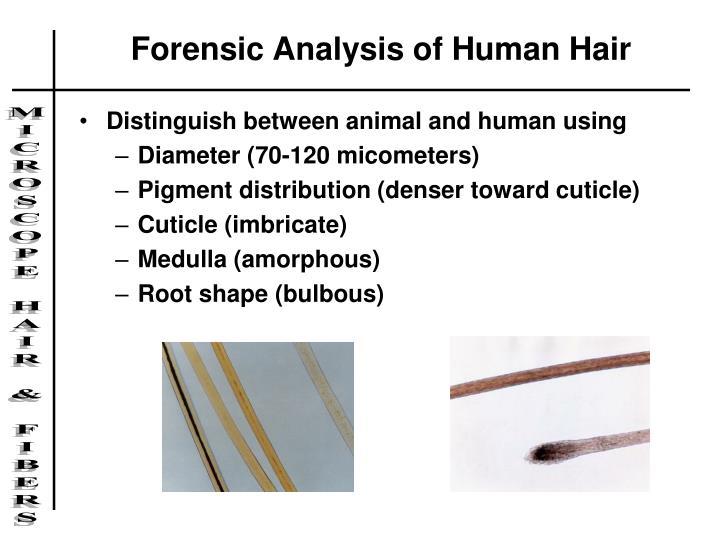 Forensic Analysis of Human Hair