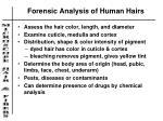 forensic analysis of human hairs