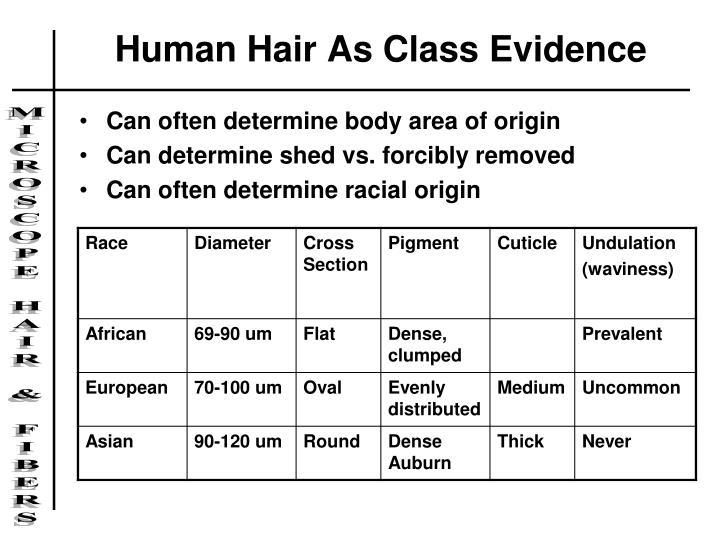 Human Hair As Class Evidence
