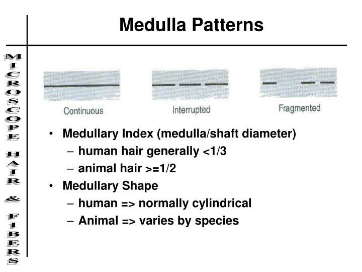 Medulla Patterns