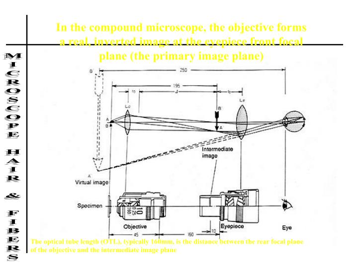 In the compound microscope, the objective forms