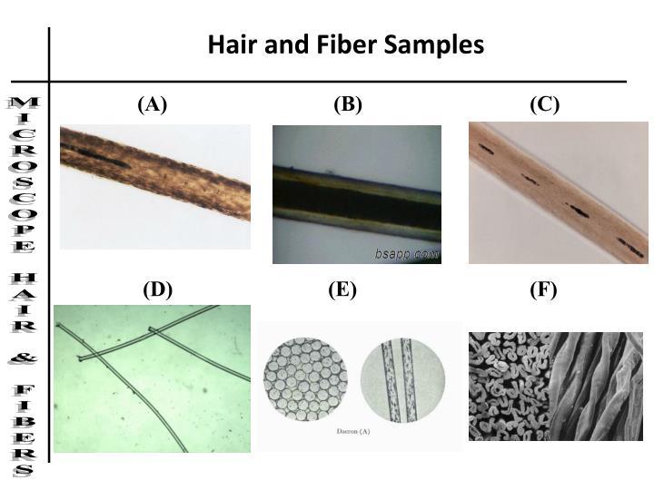 Hair and Fiber Samples