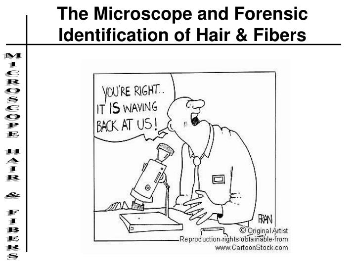 the microscope and forensic identification of hair fibers n.