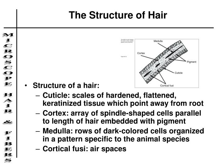 The Structure of Hair
