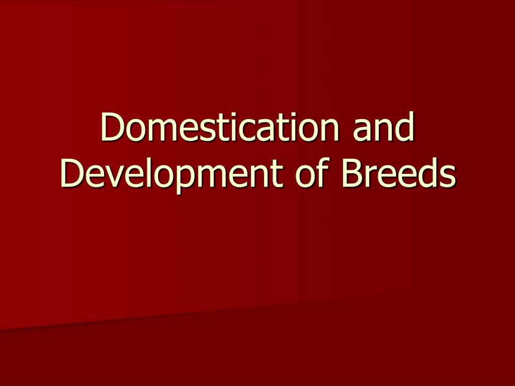 domestication and development of breeds l.