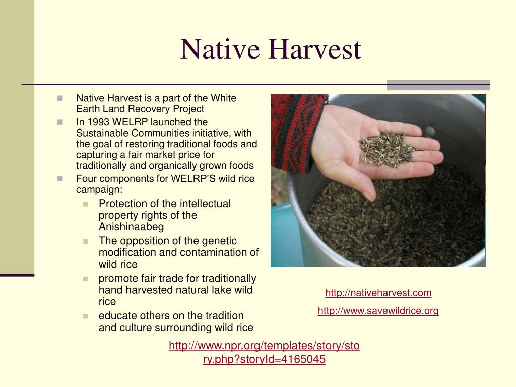 Native Harvest