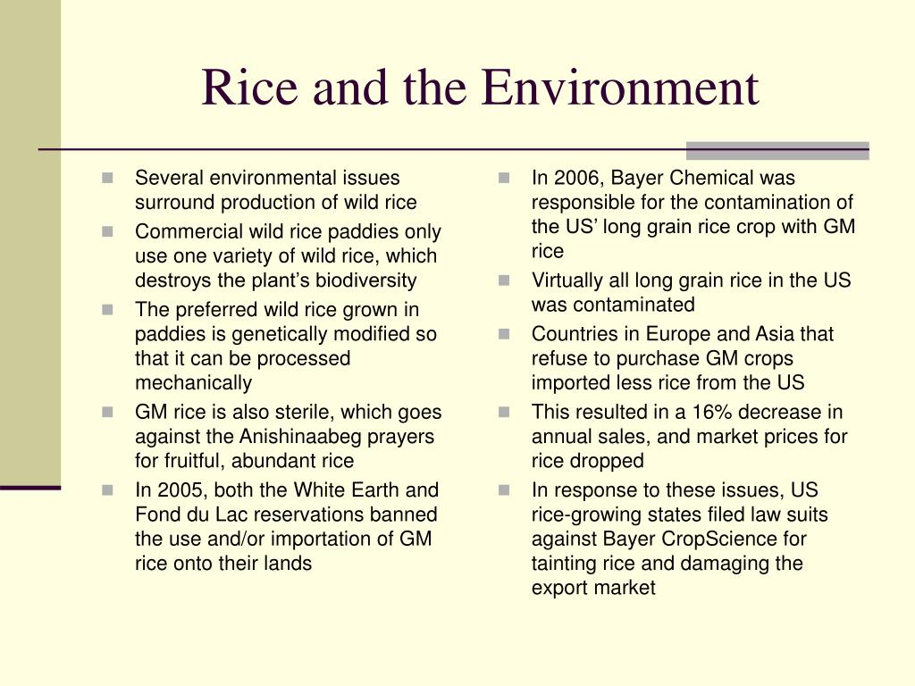 Several environmental issues surround production of wild rice