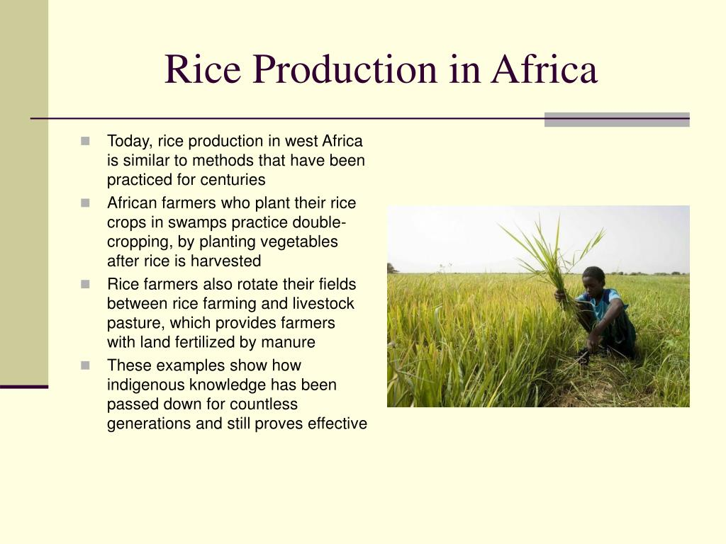 Rice Production in Africa