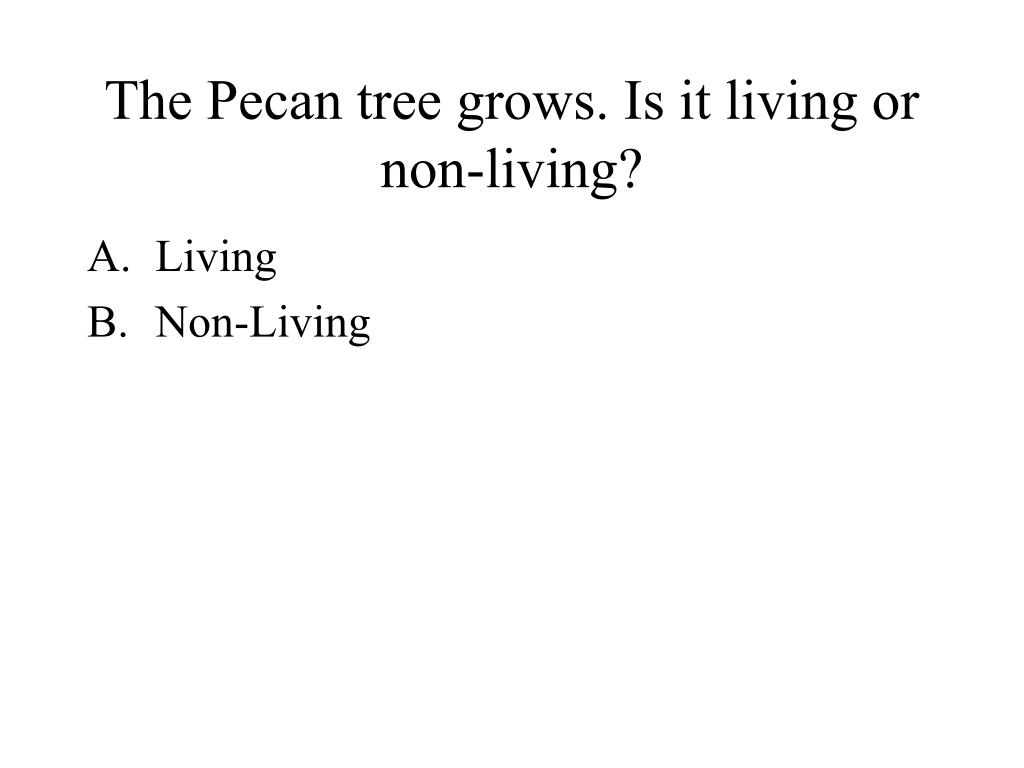 The Pecan tree grows. Is it living or non-living?