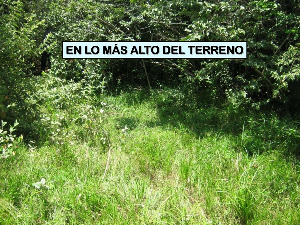 EN LO MÁS ALTO DEL TERRENO