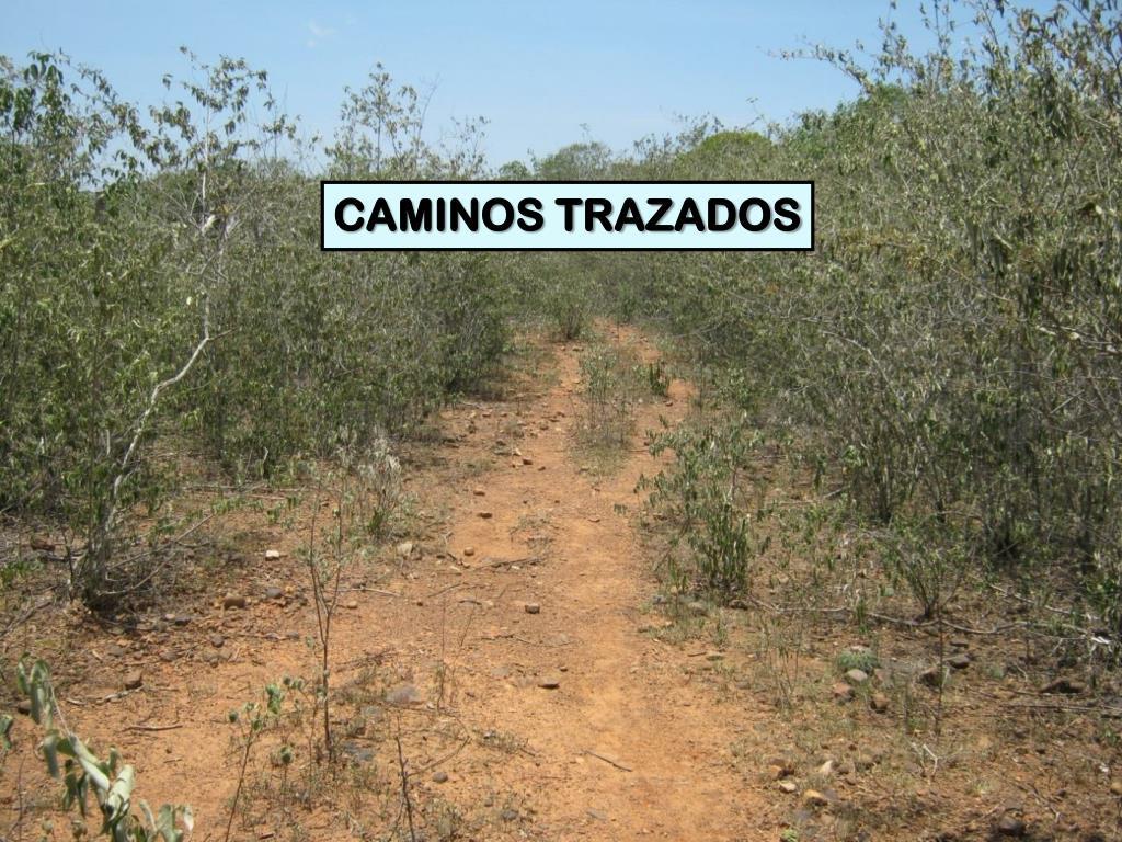 CAMINOS TRAZADOS