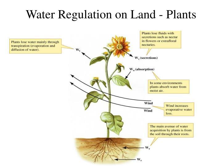 Water Regulation on Land - Plants