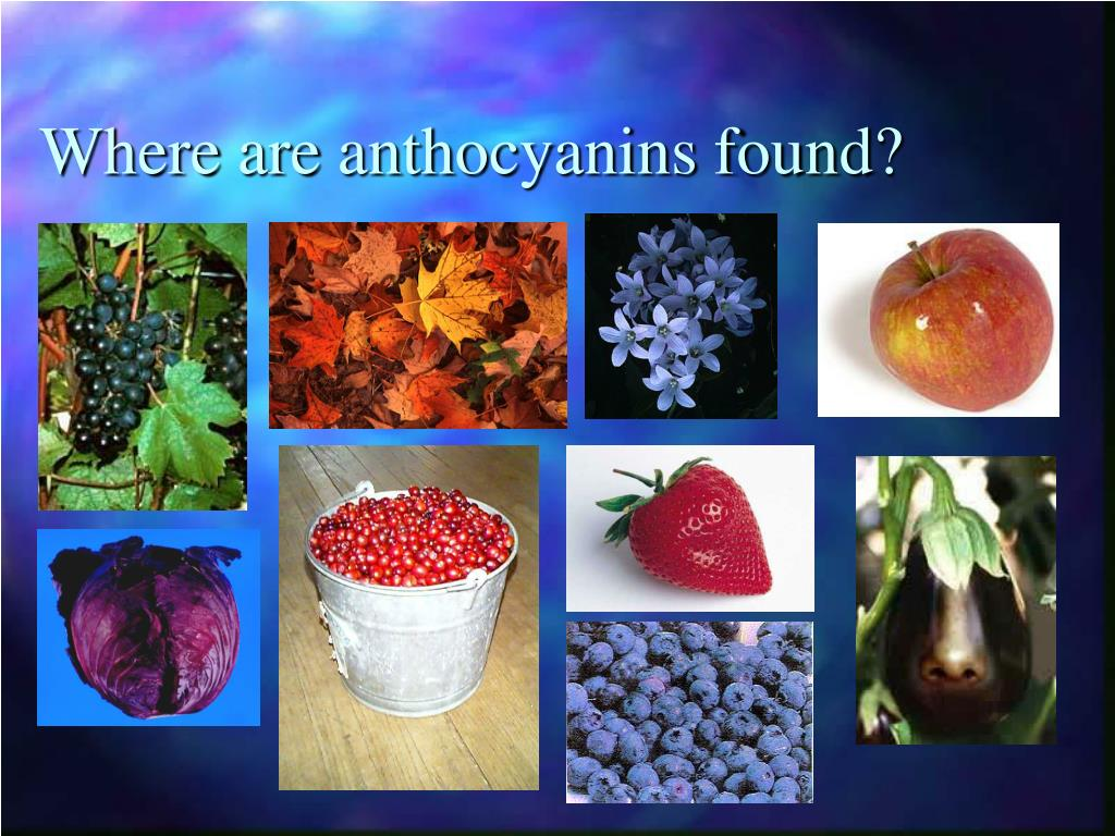 Where are anthocyanins found?