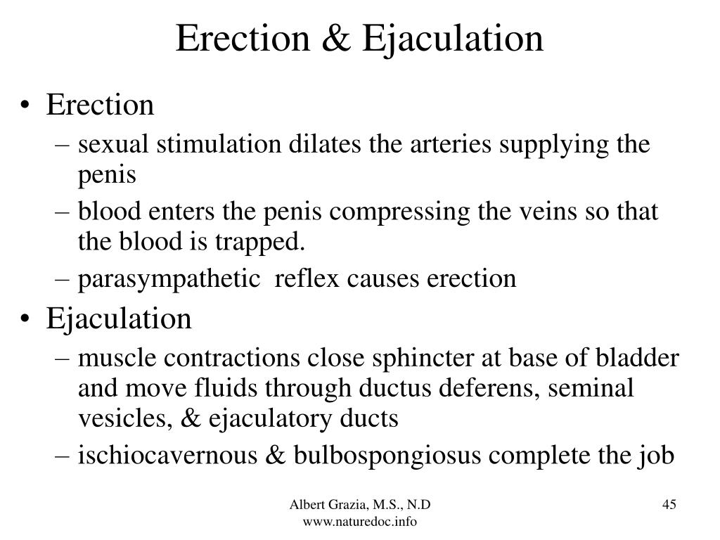 Erection & Ejaculation