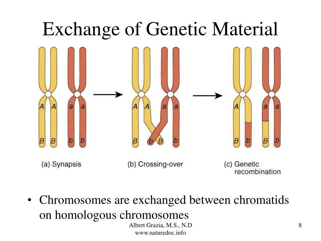 Exchange of Genetic Material