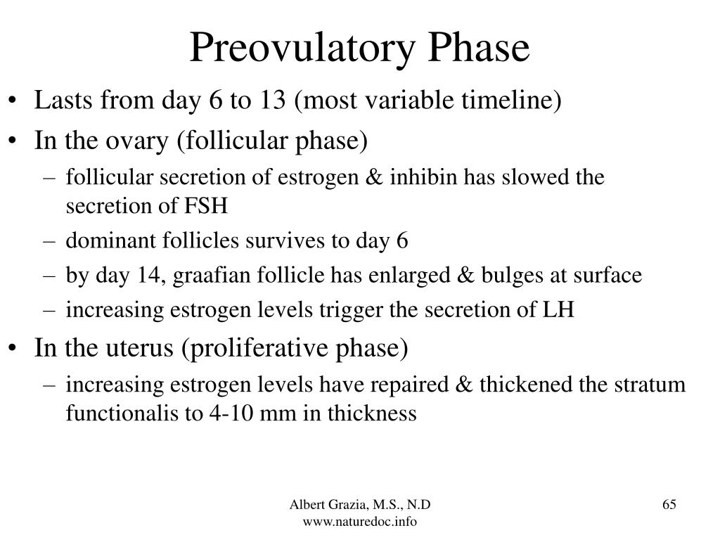 Preovulatory Phase