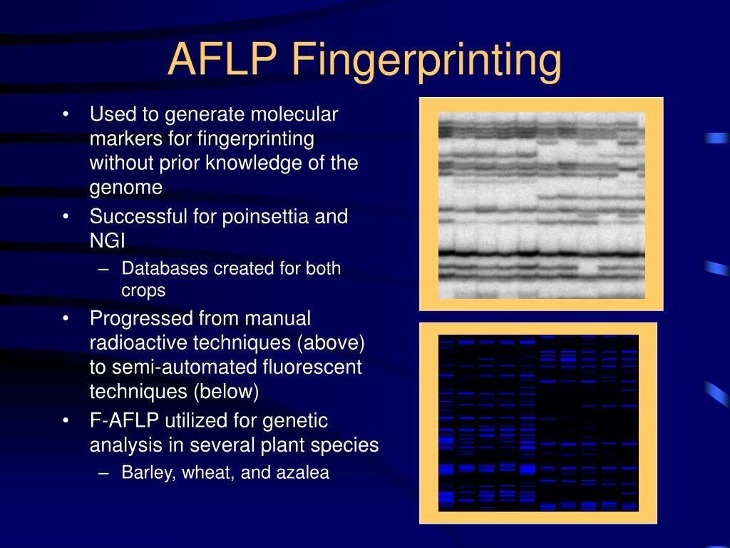 AFLP Fingerprinting