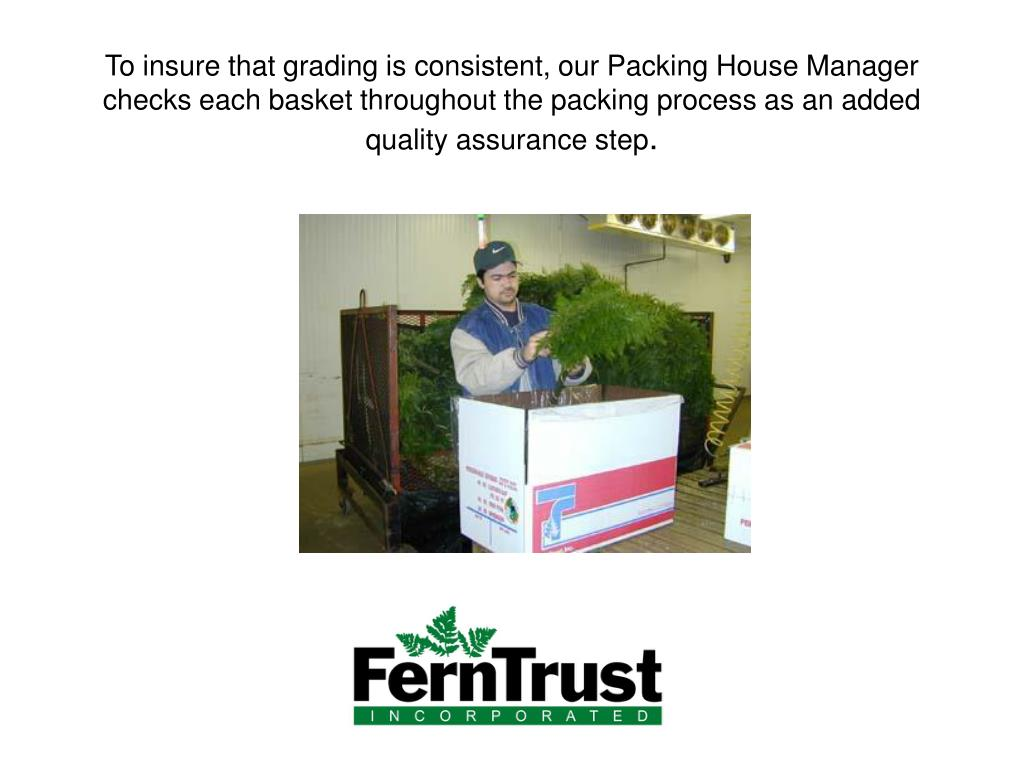 To insure that grading is consistent, our Packing House Manager checks each basket throughout the packing process as an added quality assurance step