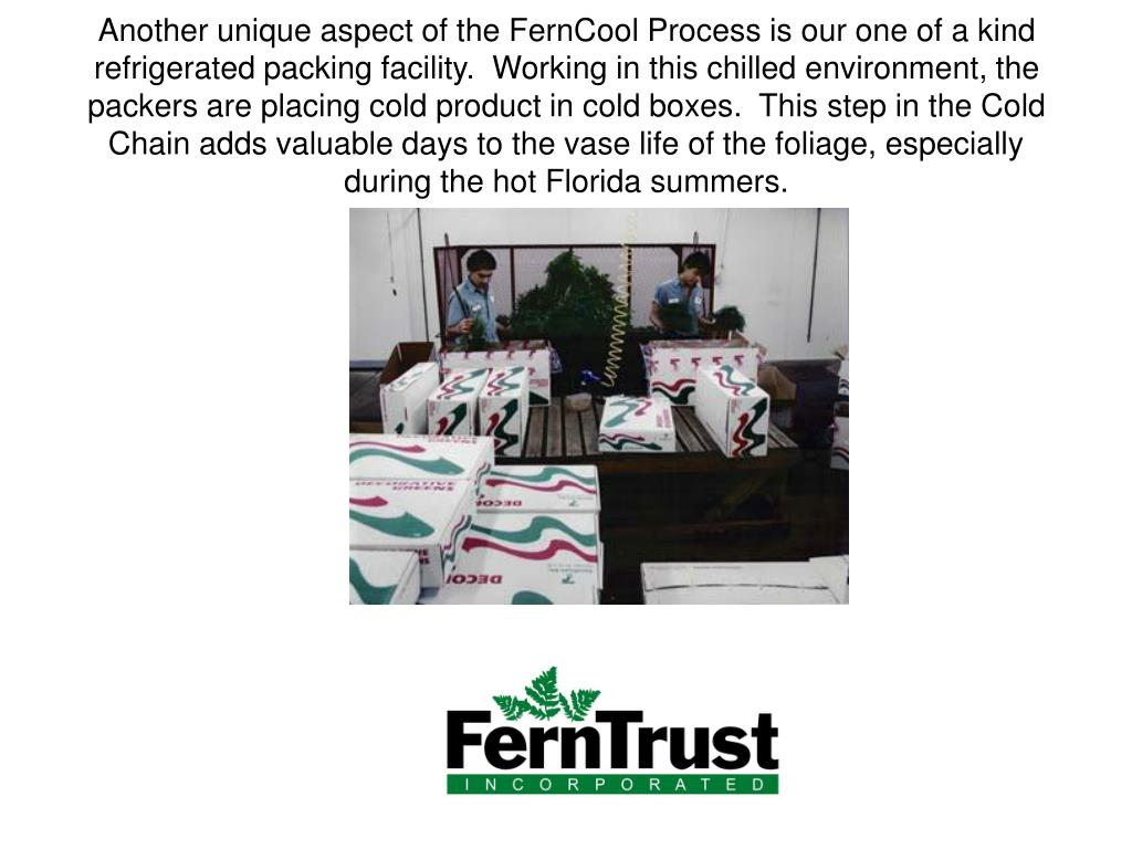 Another unique aspect of the FernCool Process is our one of a kind refrigerated packing facility.  Working in this chilled environment, the packers are placing cold product in cold boxes.  This step in the Cold Chain adds valuable days to the vase life of the foliage, especially during the hot Florida summers.