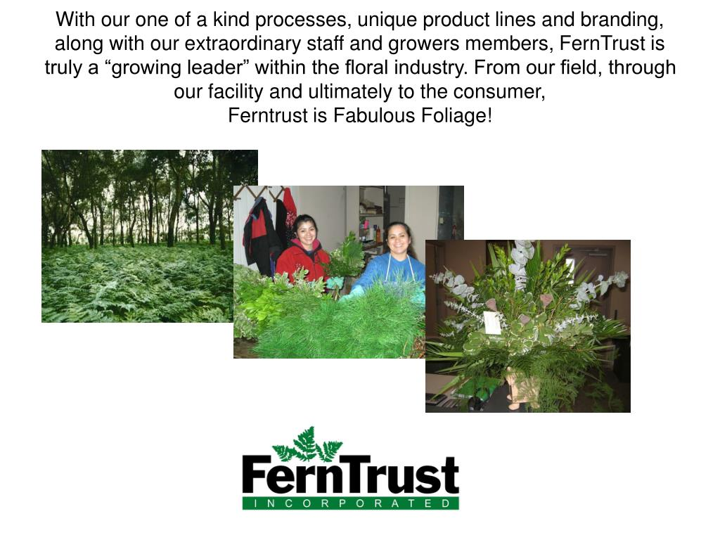 """With our one of a kind processes, unique product lines and branding, along with our extraordinary staff and growers members, FernTrust is truly a """"growing leader"""" within the floral industry. From our field, through our facility and ultimately to the consumer,                                   Ferntrust is Fabulous Foliage!"""