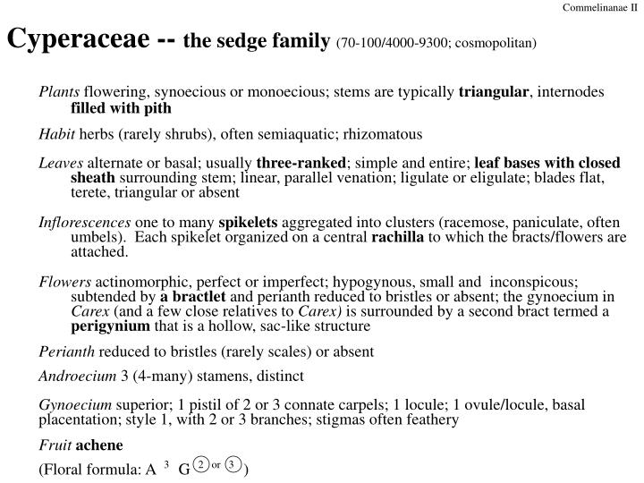 Cyperaceae the sedge family 70 100 4000 9300 cosmopolitan