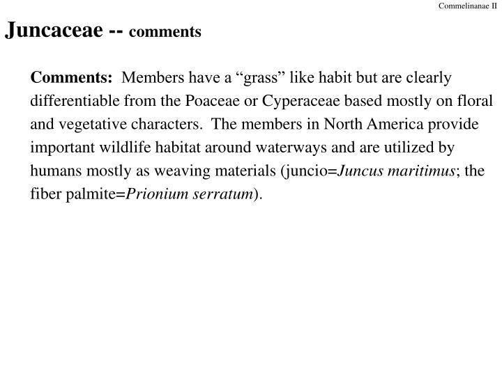 Juncaceae comments