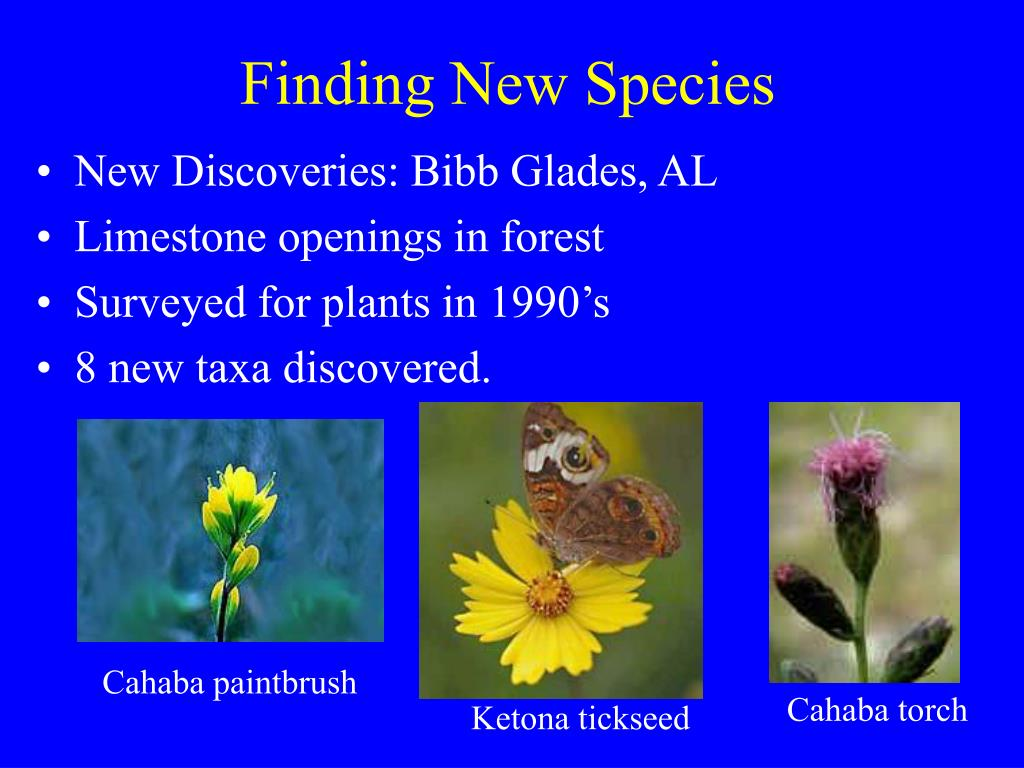 Finding New Species