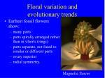 floral variation and evolutionary trends