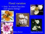 floral variation28