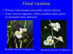 floral variation31