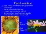 floral variation41