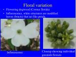 floral variation42