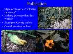 pollination49