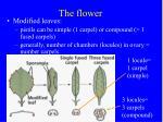 the flower14