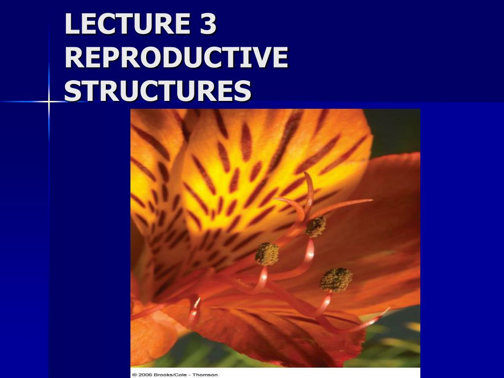 lecture 3 reproductive structures