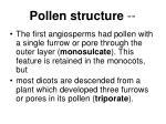 pollen structure