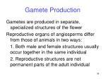 gamete production36