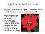 light dependent pathway13