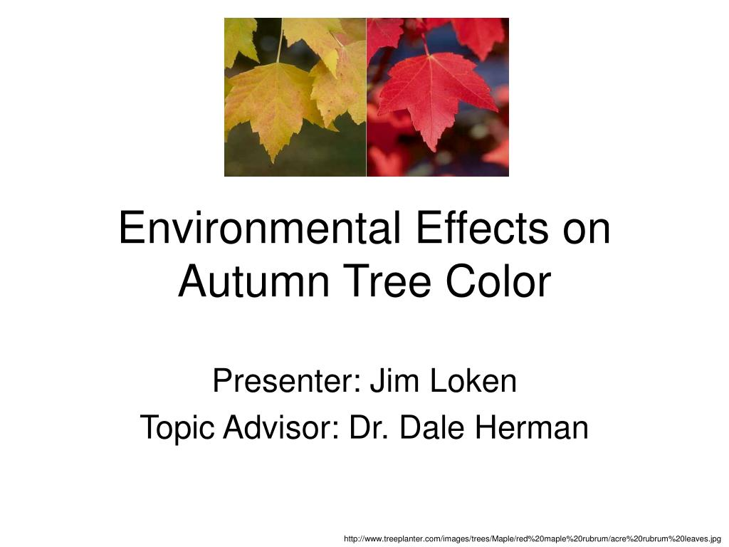 environmental effects on autumn tree color l.