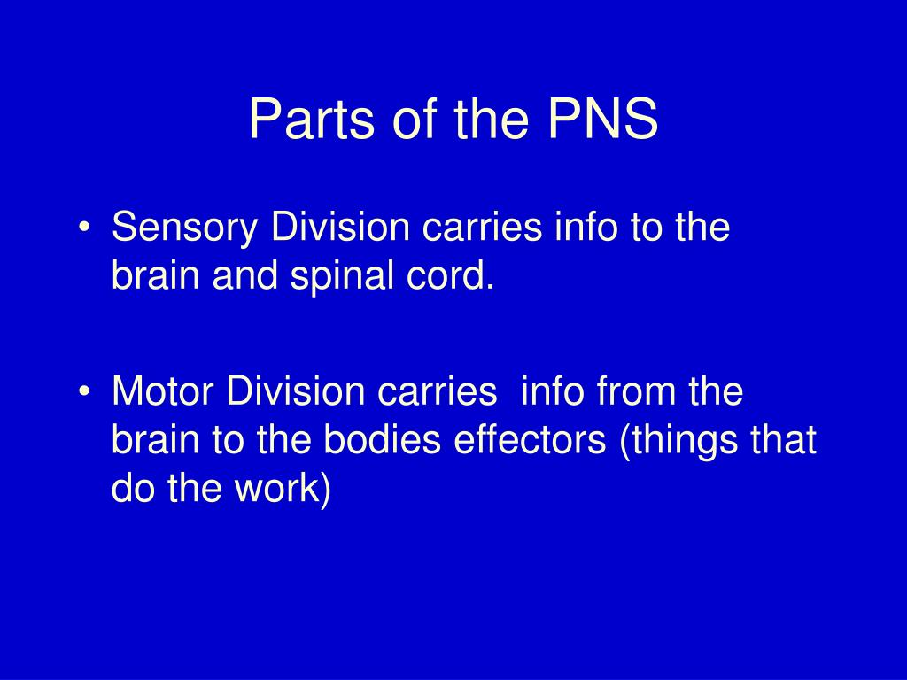 Parts of the PNS