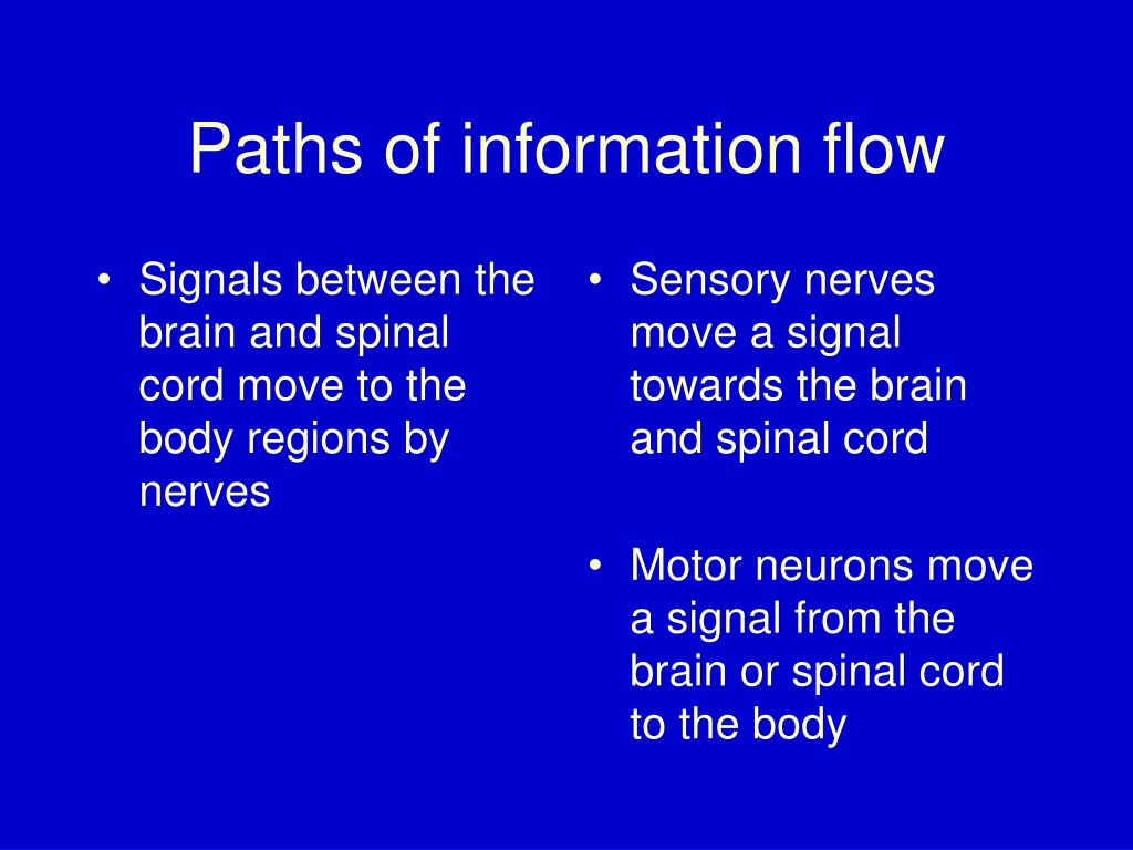 Signals between the brain and spinal cord move to the body regions by nerves
