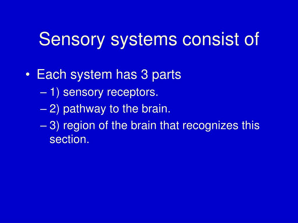Sensory systems consist of