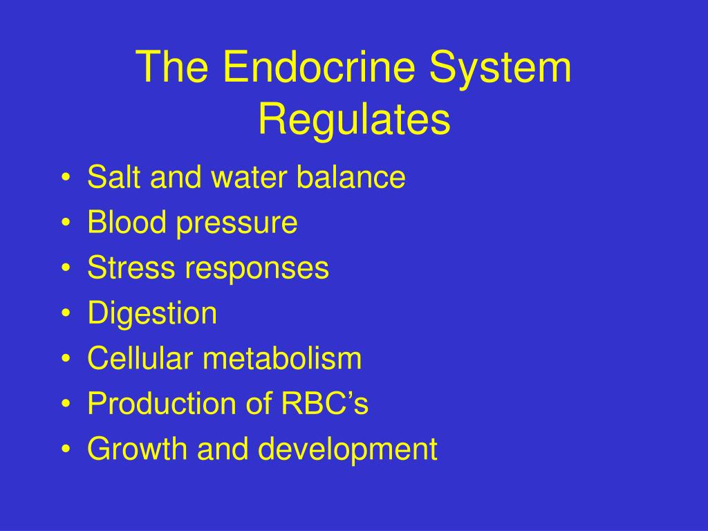 The Endocrine System Regulates