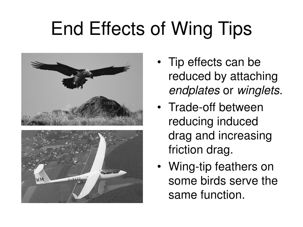 End Effects of Wing Tips