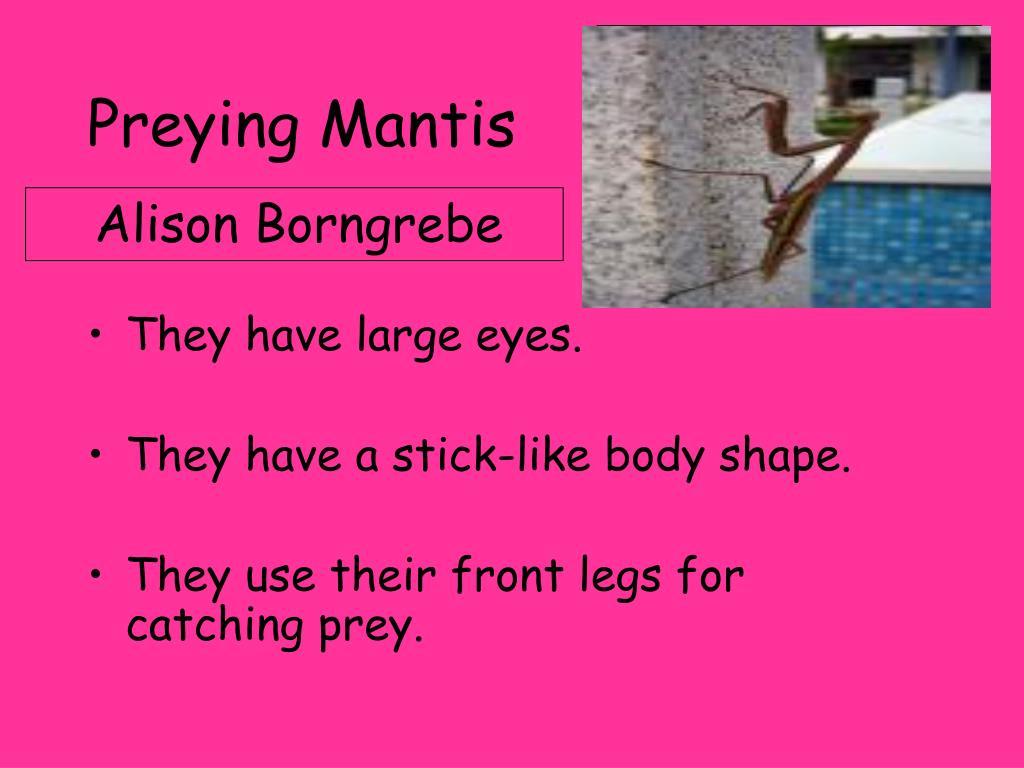 preying mantis l.
